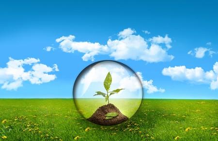 esfera de cristal: Esfera de cristal con las plantas en un campo de hierba alta Foto de archivo