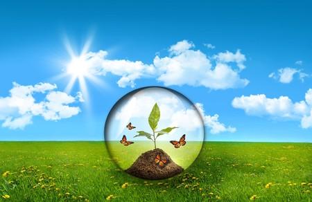 esfera de cristal: Esfera de vidrio con la planta en un campo de hierba alta Foto de archivo