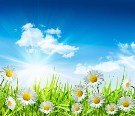 Daisies and grass with bright blue sky and clouds Stock Photo