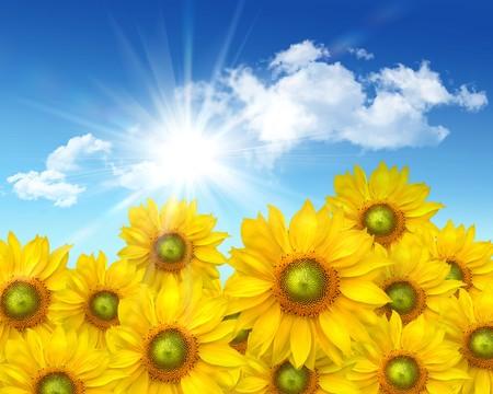 Big sunflowers against a  blue summer sky Stock Photo - 4402535