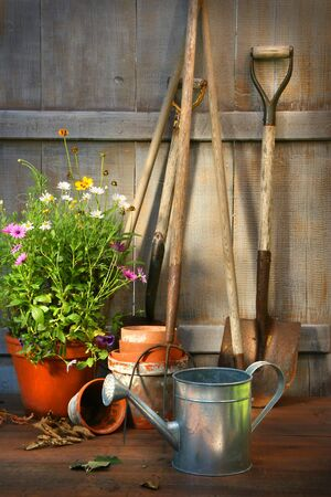 Garden tools and a pot of summer flowers in garden shed Фото со стока