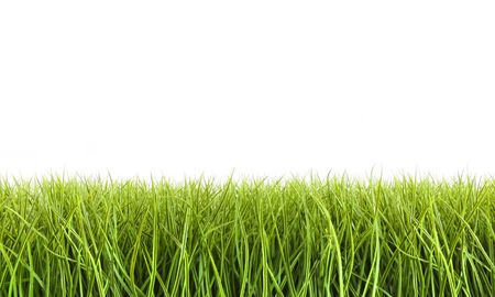 lawn care: Tall grass against a white background Stock Photo