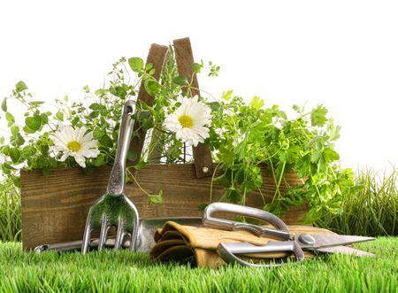 Verse kruiden in een houten doos met tuin hulp middelen op het gras