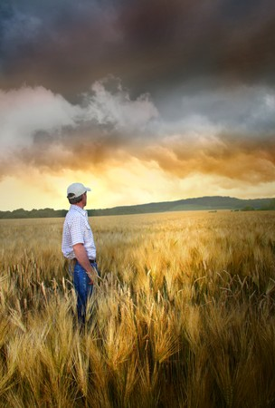 wheatfield: Man standing in a field of wheat at sunset Stock Photo