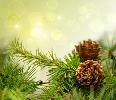 navidad navidad: Pine cones on branches with holiday background Stock Photo