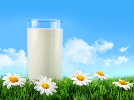 milk milk products: Vaso de leche en la hierba con margaritas y cielo azul