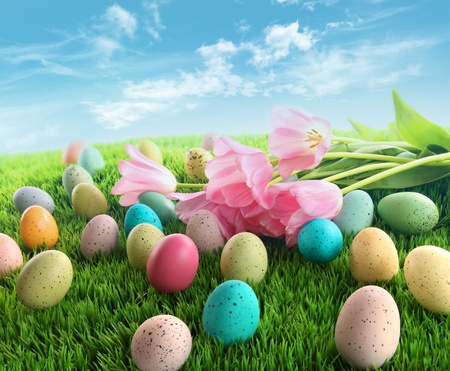 Easter eggs with pink tulips on grass with blue sky photo