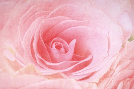 Closeup of a pink rose with antique finish