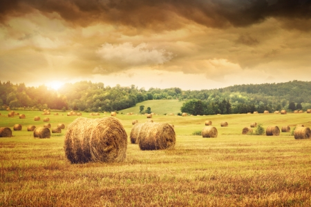 haycock: Field of freshly cut bales of hay with beautiful sunset Stock Photo