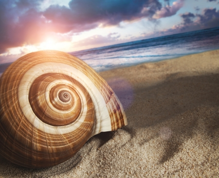 ocean waves: Large seashell in the sand at sunset Stock Photo