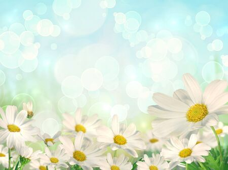 good: Spring background with white daisies and brokeh effect background
