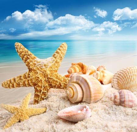 stella marina: Stella marina e conchiglie sulla spiaggia Archivio Fotografico