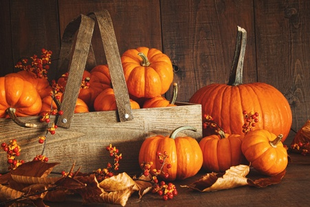 fall background: Colorful pumpkins with dark wood background