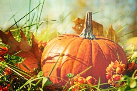 calabazas de halloween: Peque�a calabaza en la hierba con sensaci�n de color vintage Foto de archivo