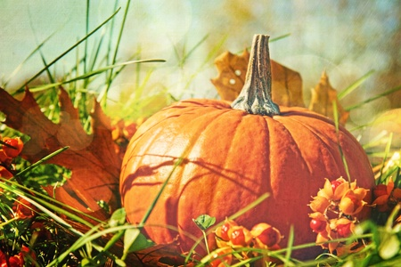 halloween pumpkins: Small pumpkin in the grass with vintage color feeling