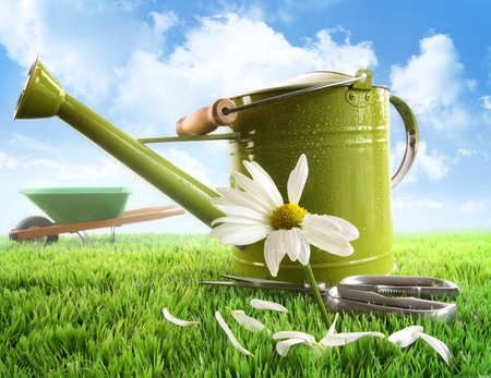 Green watering can with large daisy against sky background