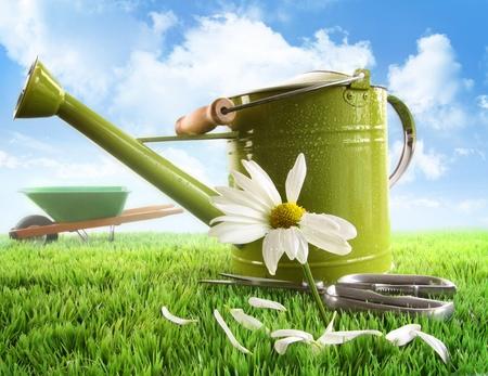 carretilla: Riego verde puede con un gran margarita contra el cielo de fondo