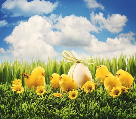 Little Easter chicks in the grass