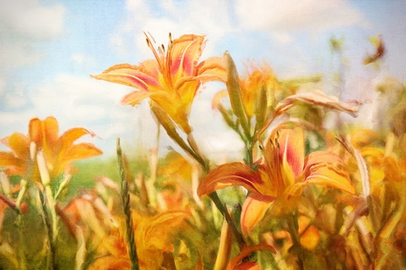 Digital Painting of orange Daylilies in field Stock Photo - 12876993