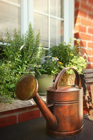 urban gardening: Pots of flowers and herbs on window ledge