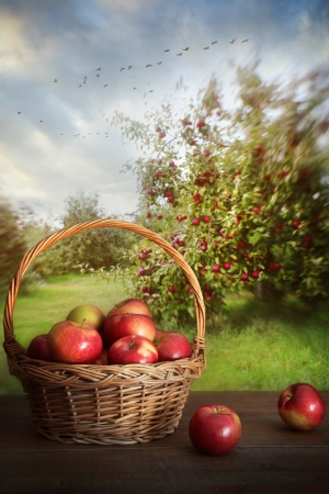 Basket of delicious apples on table in orchard