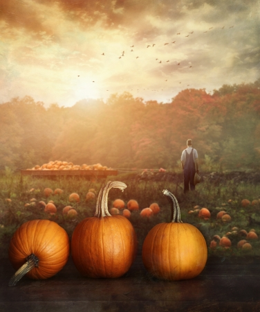 Pumpkins on table in farmer's field at sunset