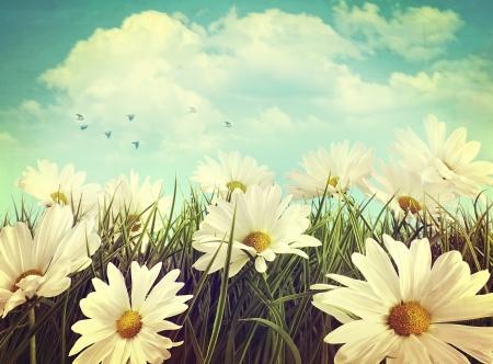 Vintage look of summer daisies in grass