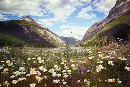 Field of beautiful wild flowers with Rocky Mountains in background photo