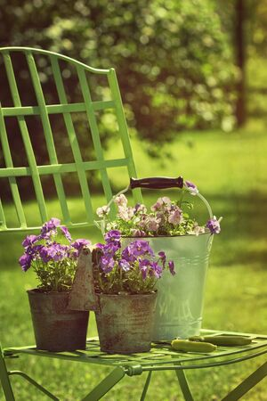 Spring violets in pots on garden chair Stock Photo - 23132417
