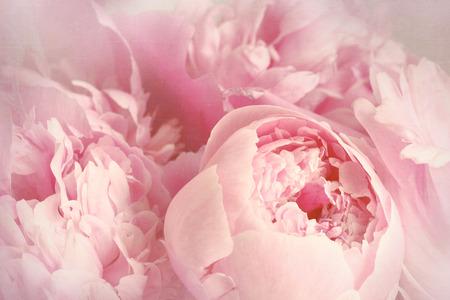 Close-up van pioen bloemen