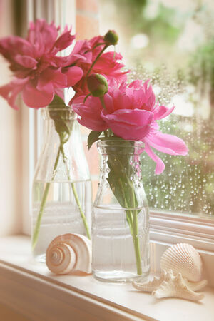 colorize: Closeup of peony flowers in milk bottles in the window Stock Photo