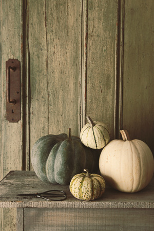 Pile of pumpkins and gourds on old bench photo