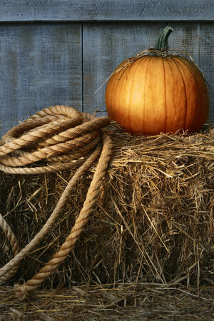 large pumpkin: Large pumpkin with rope on hay in the barn
