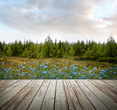 forest products: Wooden deck with forest trees and flowers in background