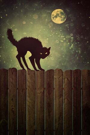 backlit: Black cat on old wood fence at  night with vintage look