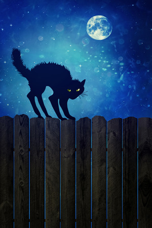 backlit: Black cat on old wood fence at  night Stock Photo