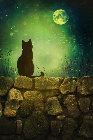 bad luck: Black cat on old rock wall Halloween night Stock Photo