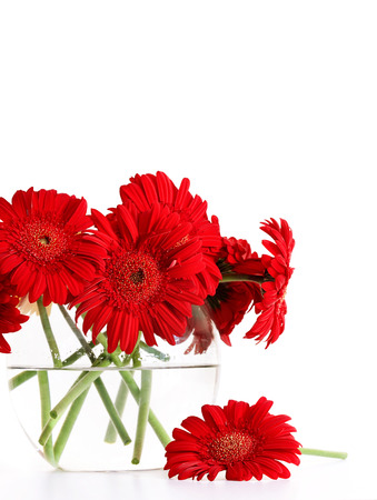 vase: Closeup od red gerber daisies in glass vase