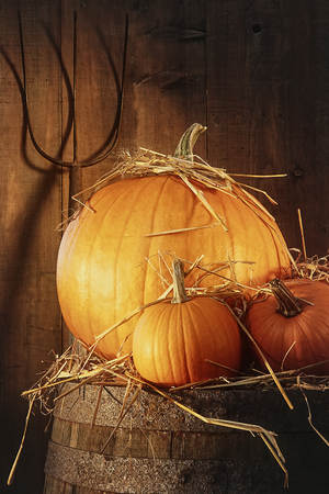 Rustic scene with pumpkins and pitch fork on barrel