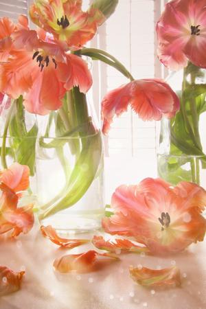 Closeup of tulips near window
