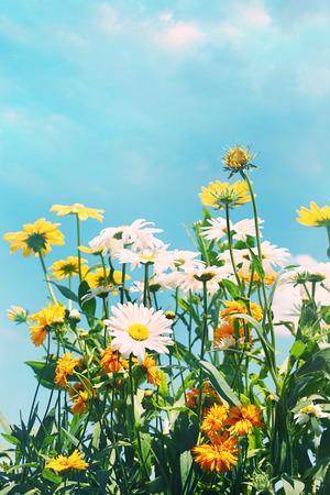 Summer flowers against a blue sky 免版税图像