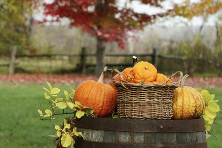 Pumpkins and gourds on old barrel 免版税图像