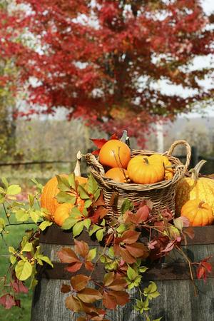 Autumn pumpkins and gourds barrel 免版税图像