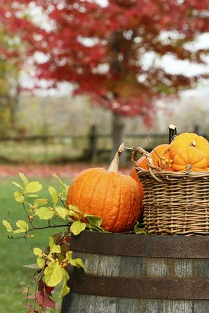 Closeup of pumpkins and gourds for autumn harvest 免版税图像