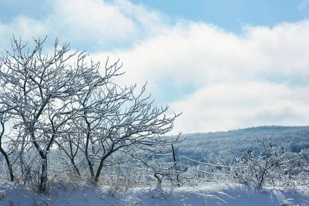 Ice and frost covered trees on a winter day 免版税图像