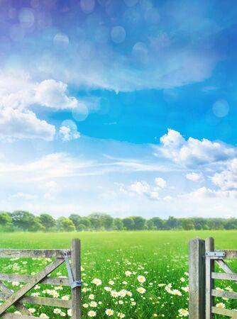 Landscape with flowers in meadow against blue summer sky 免版税图像