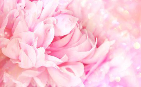Closeup of peony flower on soft pastel background 免版税图像