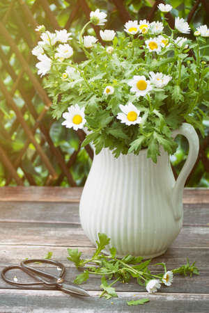 Daisies in white jug on table
