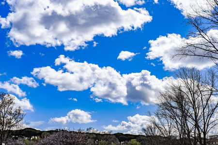dora: Italy, Rome, Villa Dora Pamphili - 06 March 2016: Clouds on one of the bluest skies Ive ever seen Stock Photo