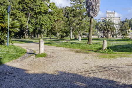 pino: Italy, Rome, Villa Dora Pamphili - 06 March 2016: Its morning in the park of Villa Doria Pamphili, the largest park in Rome; It is a place where you can walk, run, ride a bicycle and of course relax